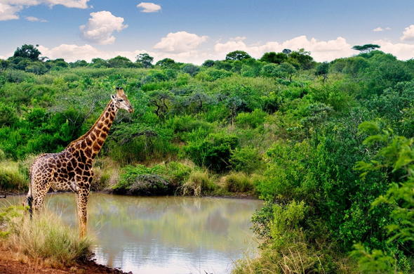 Go on game drives at nearby Nature Reserves.