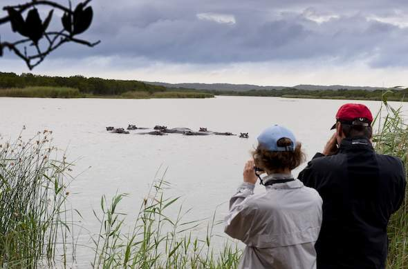 Hippo spotting in St. Lucia Wetlands Park.