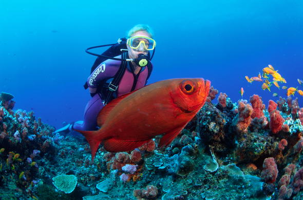 Enjoy a world class Scuba diving experience.